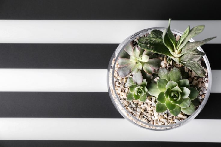 Florarium with succulents on striped background