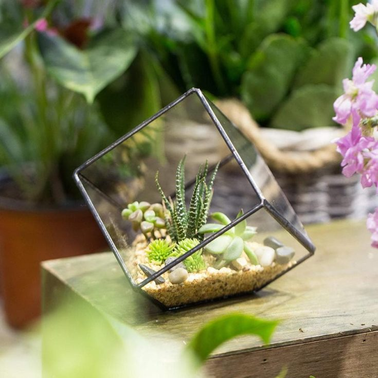 Geometric Decorative Terrarium Cube