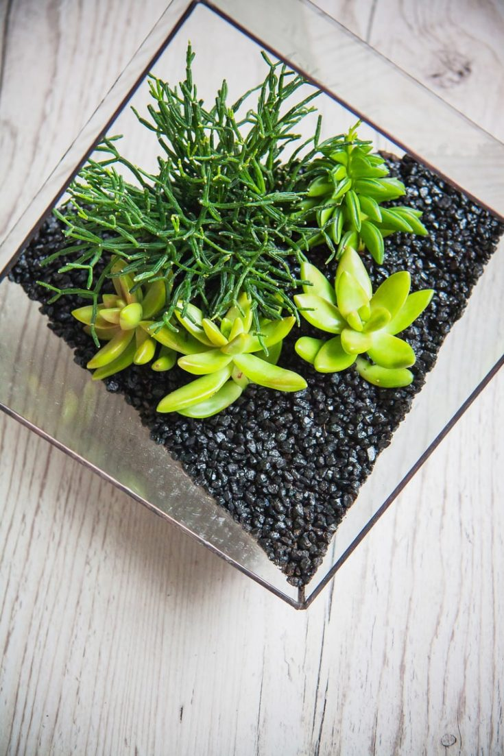 Glass florarium for plants beautiful geometric vase