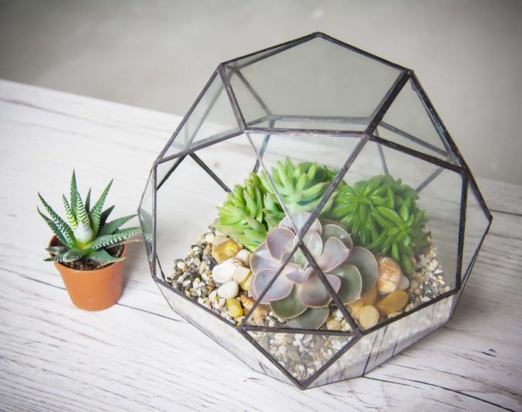 glass florarium for plants