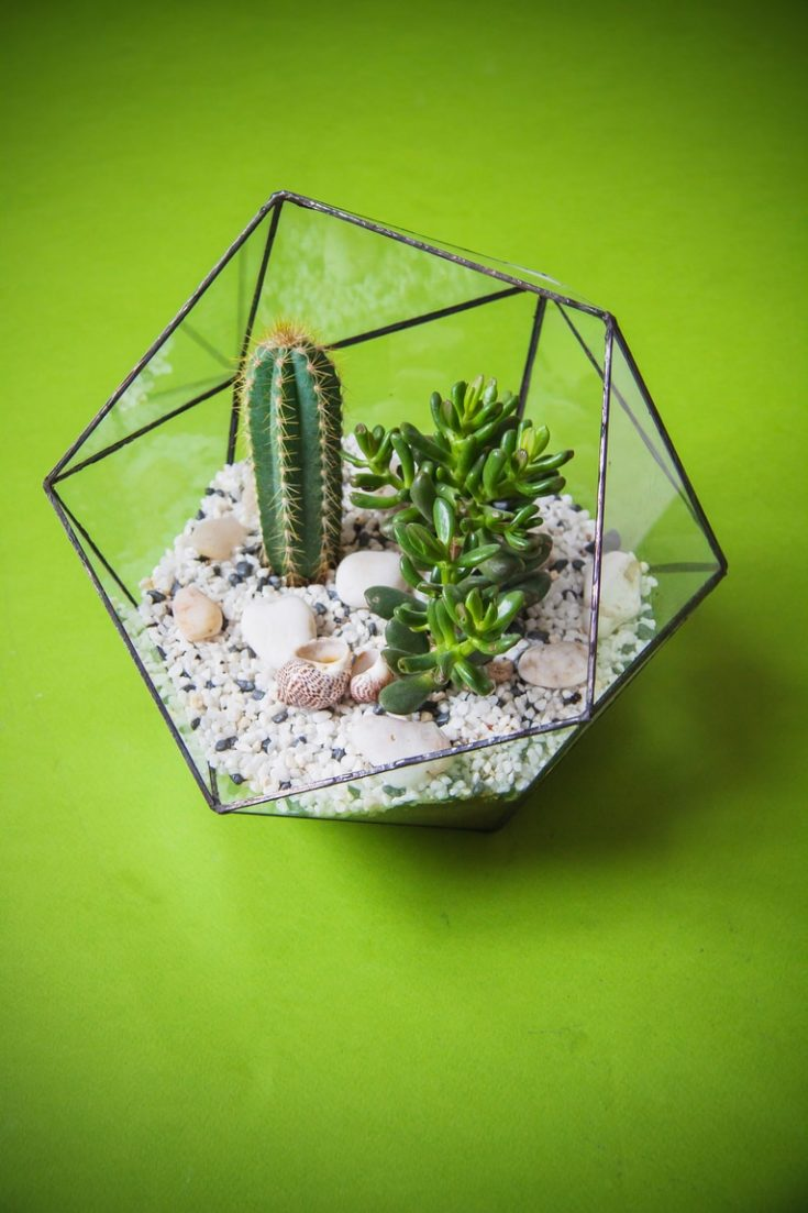 Glass florarium for plants with green background