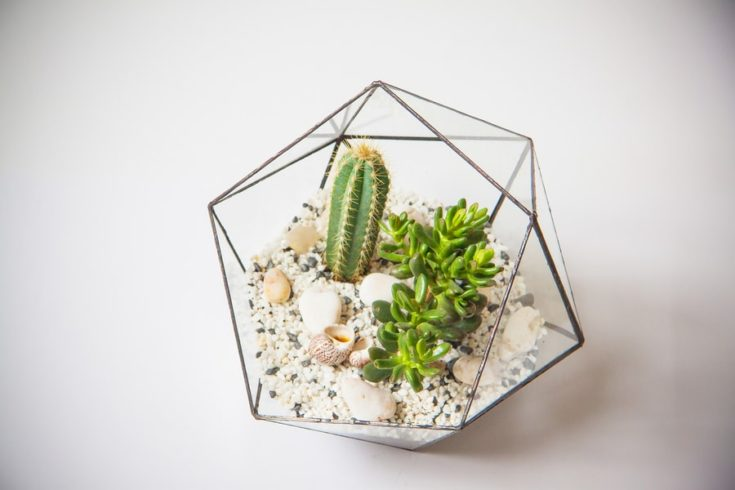 Glass florarium for succulents