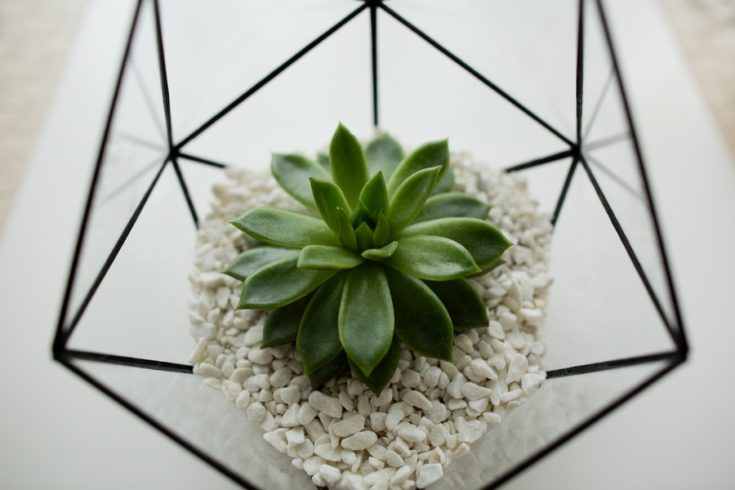 Green succulent in a glass pot in white loft interior in scandinavian style