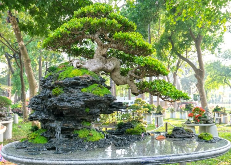 Bonsai tree with rich leaves on top of a tall rock formation.
