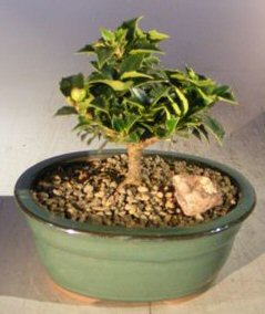 Little bonsai tree planted on rocks and pebbles in a ceramic pot.