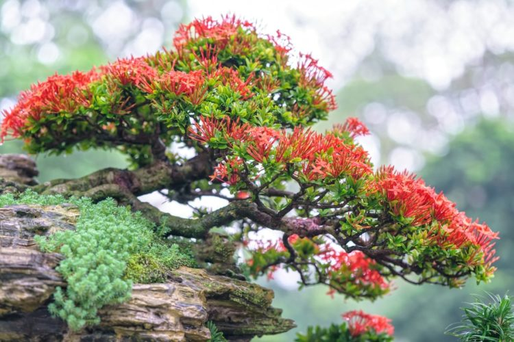 Slanted red flower bonsai on top of the rock.