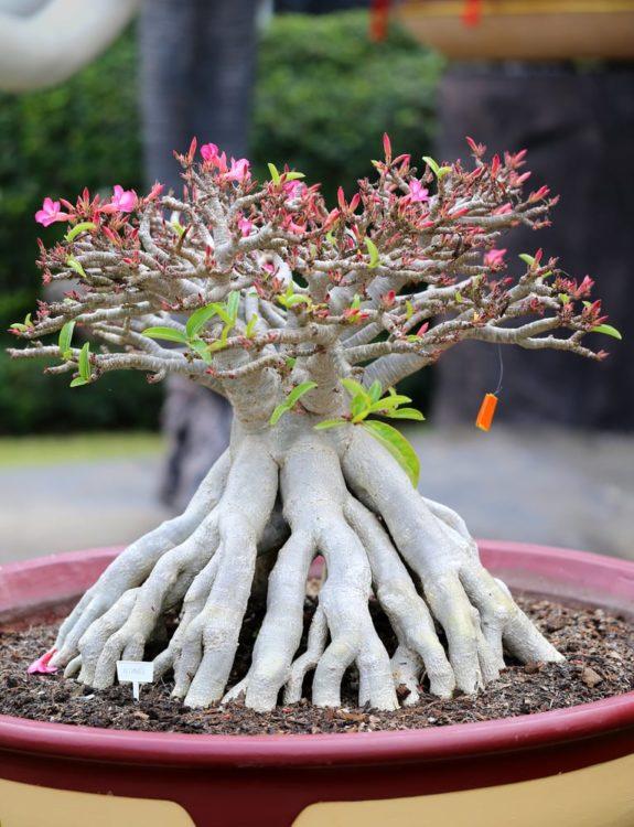 unusual beautiful bonsai tree in a park