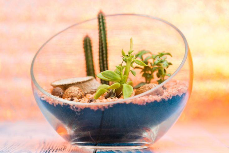 Selective focus on a beautiful florarium in glass vase