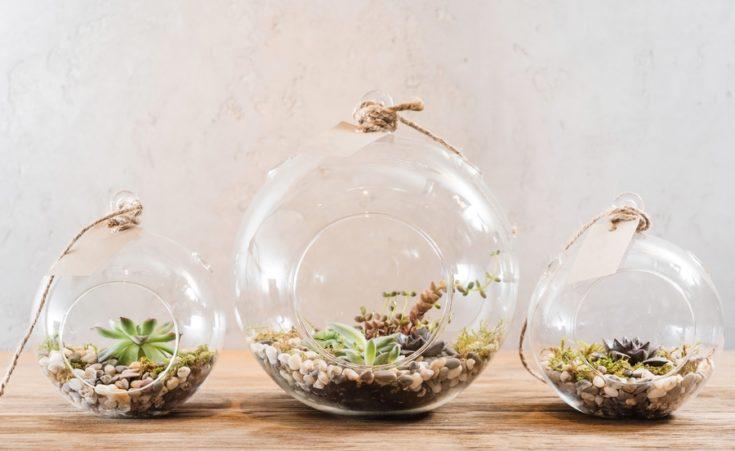 Succulent plants composition