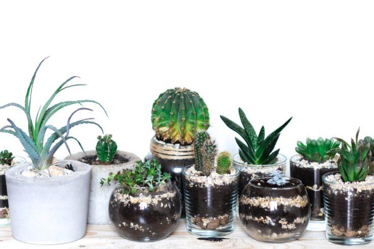 Succulents in modern monimalistic pots