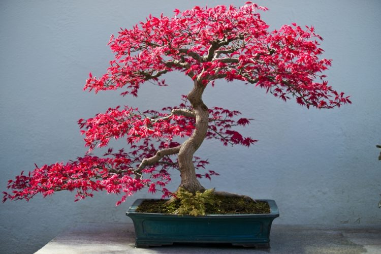 Flourishing pink bonsai tree in full bloom on top of concrete table.
