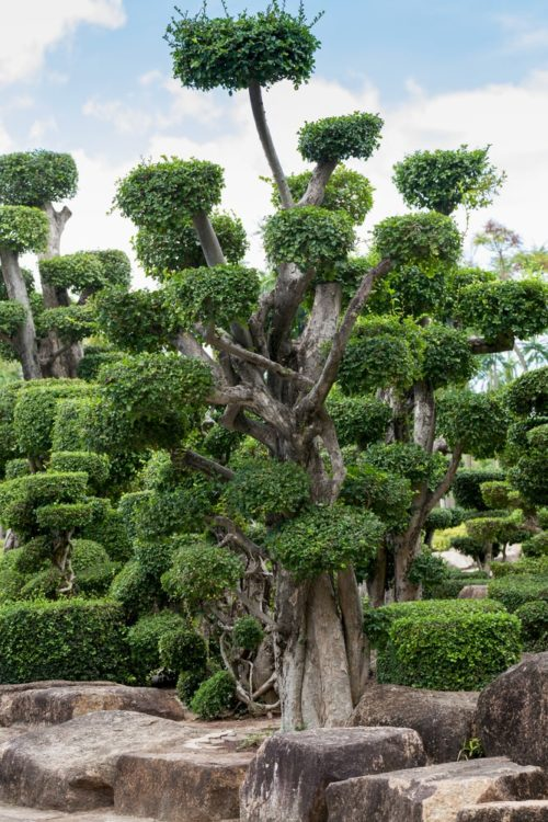 Japanese garden with bonsai trees