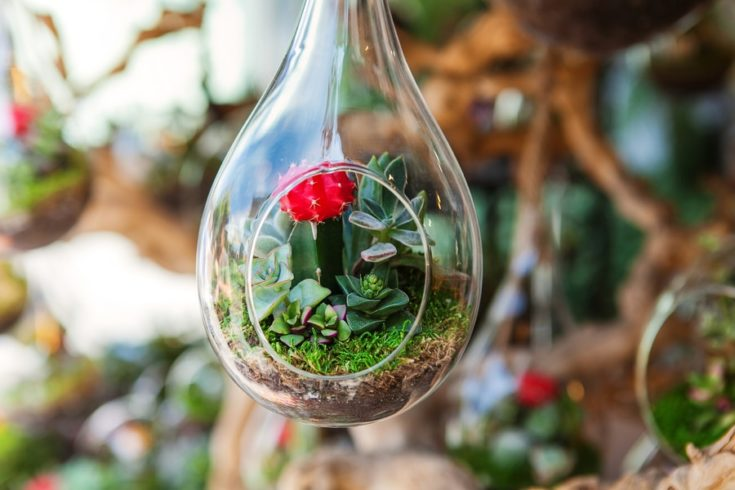 Terrarium with red succulent plant