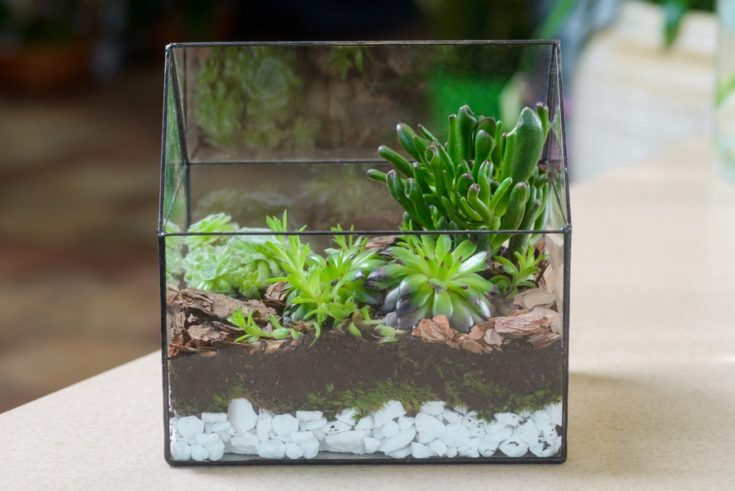 Terrarium with succulent plants in flower shop