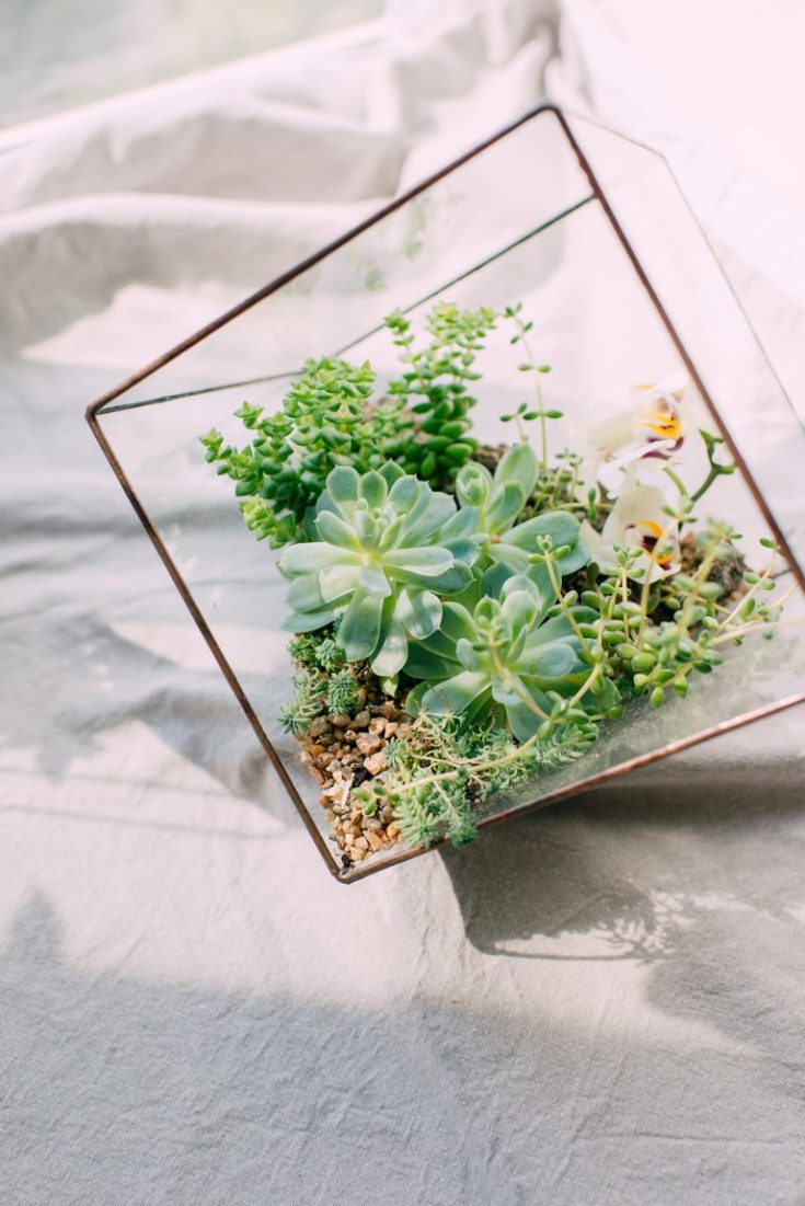 The compositions of succulents in a square aquarium