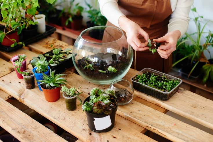 Woman florist growing house plants and flowers in mini terrarium