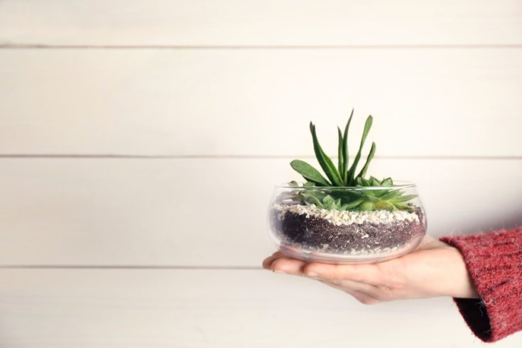Women hand holding mini succulent garden in glass terrarium