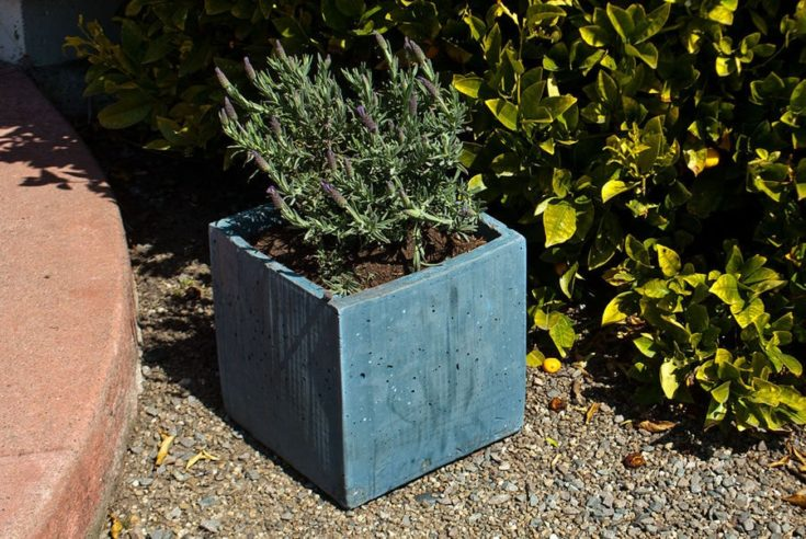 concrete planter made from cardboard boxes