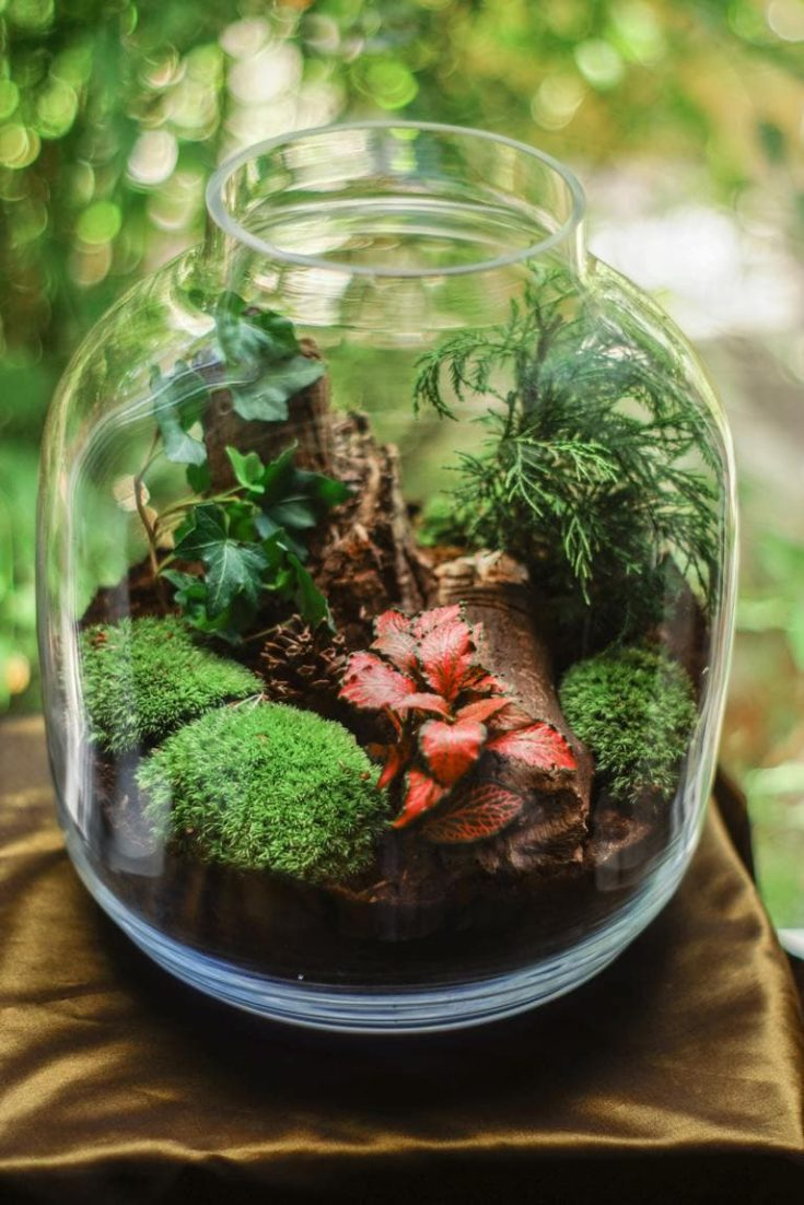 environment glass jar terrarium
