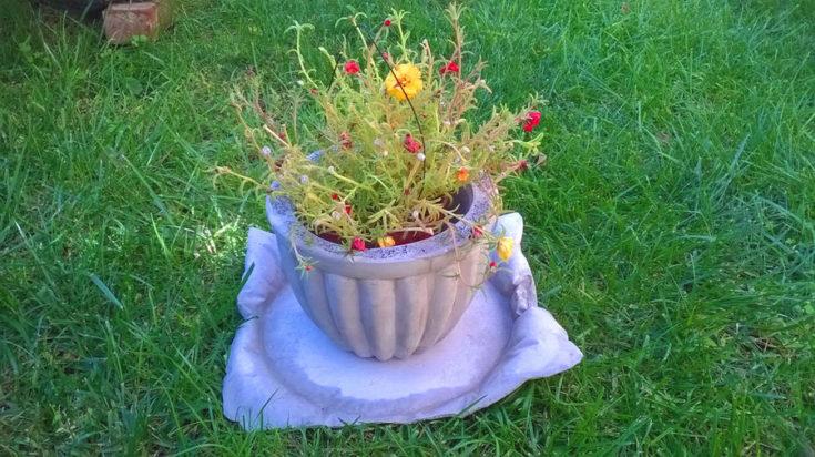 purple concrete planter with a concrete saucer