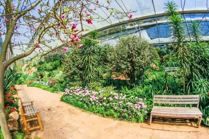 a large garden inside a greenhouse