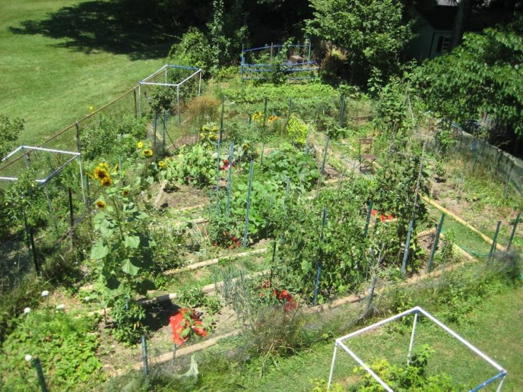 a small vegetable garden beds