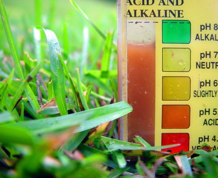Testing soil for ph and nutrient content off garden or lawn for better growth