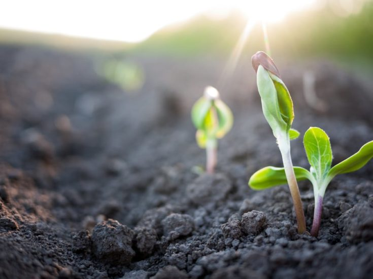 green plants growth in direct sunlight and healthy soil