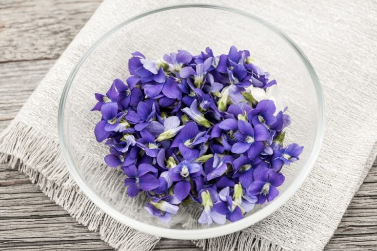 Foraged edible purple and white violet flowers in bowl