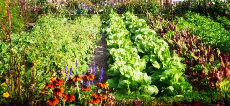 Pairing Ideas for Companion Planting