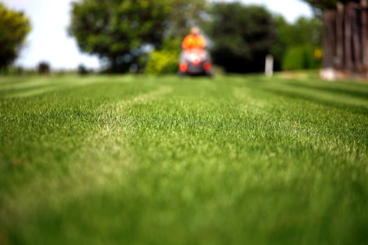 Man with lawn mower focus on the grass