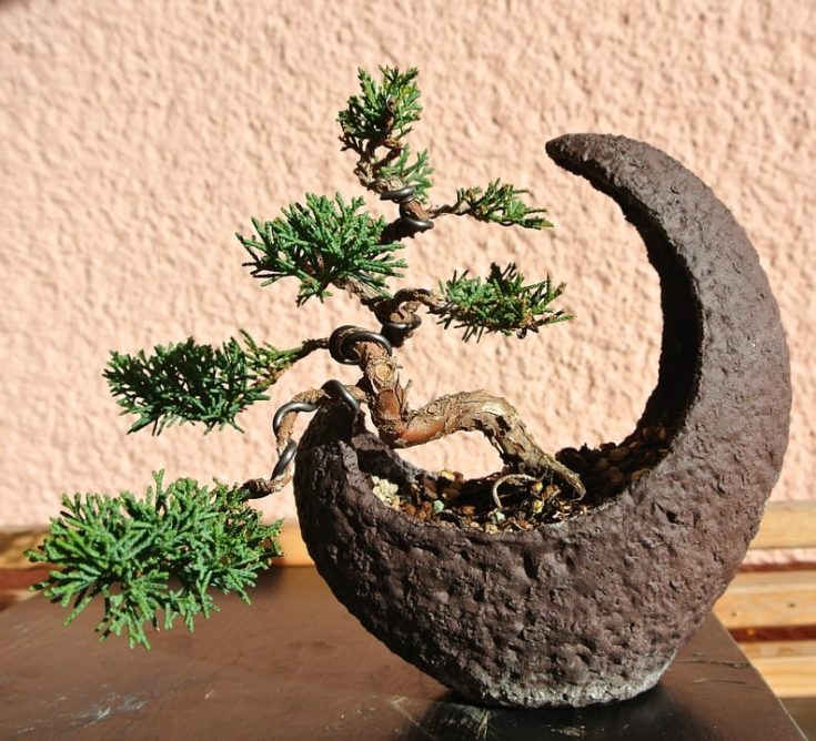 a bonsai tree in a moon shape brown container