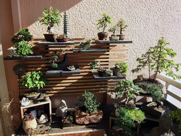 a various collection of bonsai under the rays of the sunlight