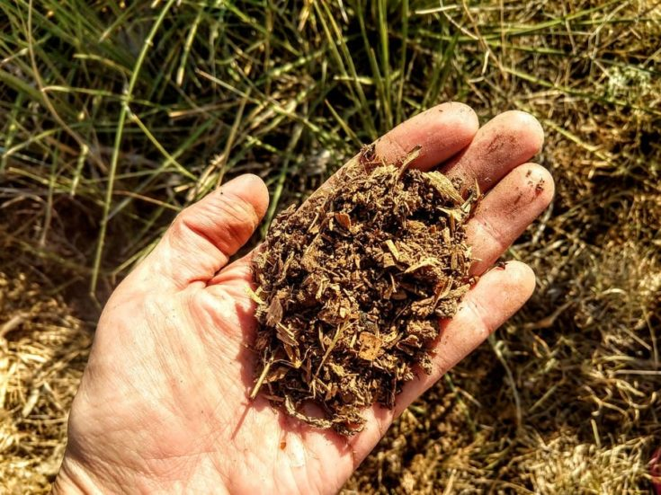 a close up shot of the hand holding compost materials