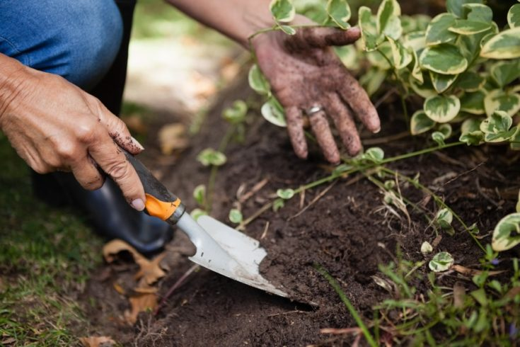 Cropped image of senior woman digging soil with handheld shovel at backyard