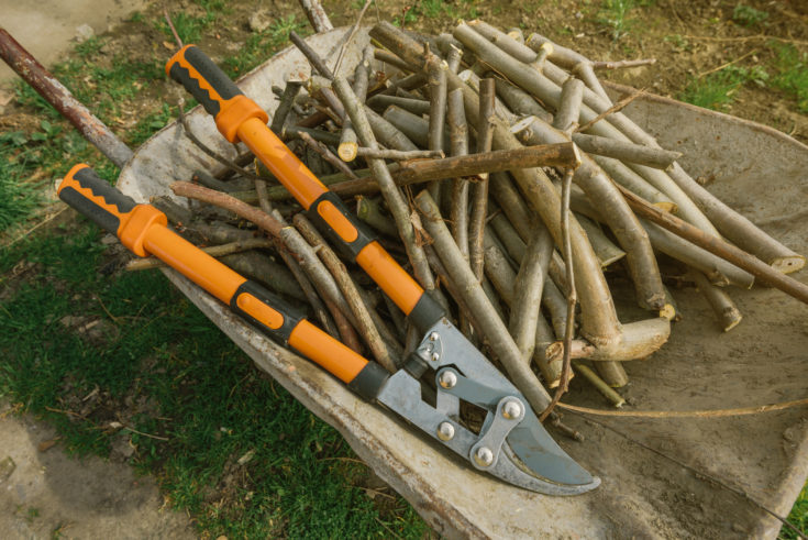 Loppers and branches, scissors for springtime garden work