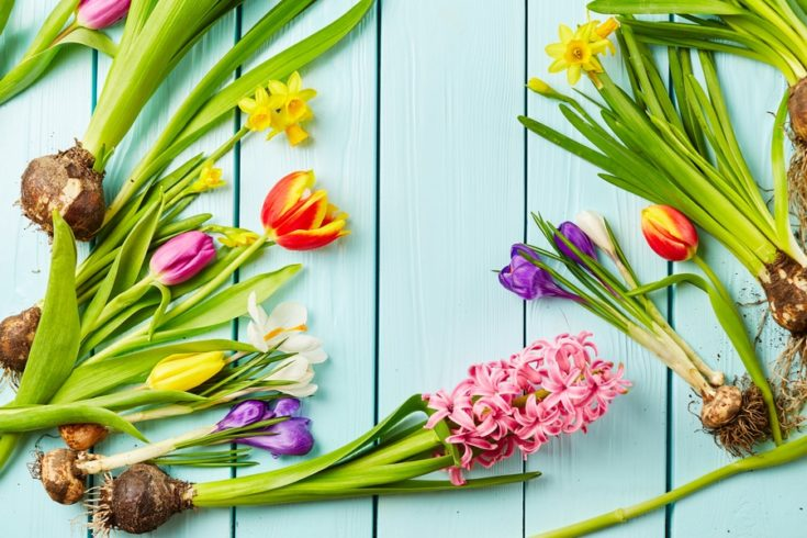 Tulips, narcissus, crocus and hyacinth on wooden background