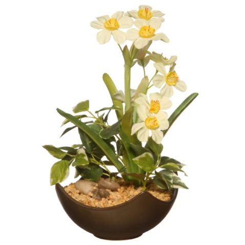 Potted Narcissus Floral Arrangement in Pot in white background