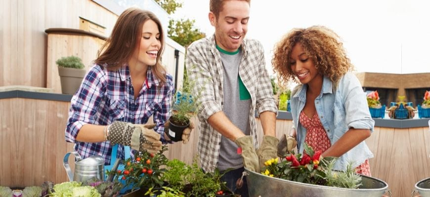 Everything You Need to Know About Growing Vegetables in Containers - feature