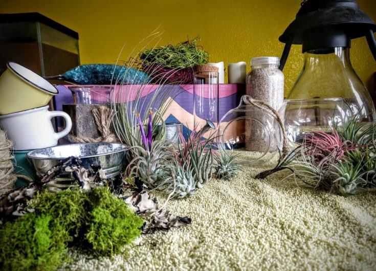 Air plants planted in a colored rocks,sand,and dried mosses with shells,glass bulb,vases and planters display.