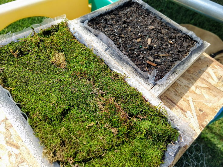 2 wooden boxes, 1 box is filled with green grass, 2nd box is filled with soil