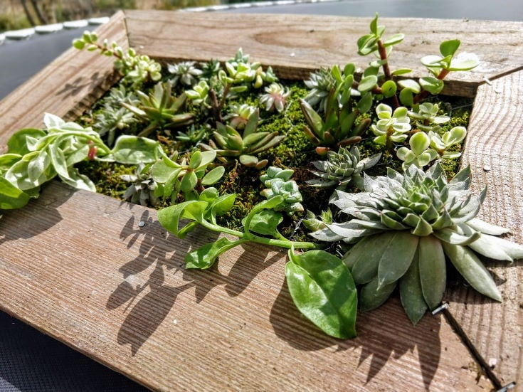 wooden frame with succulent plants