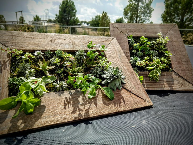 succulent plants in rectangular wooden frame placed on the balcony