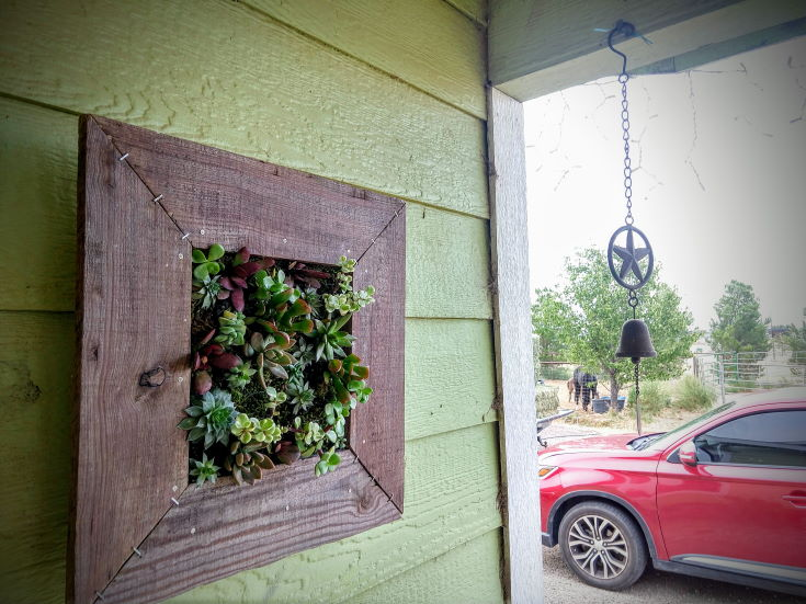 wooden frame of succulent hanged on the green wall