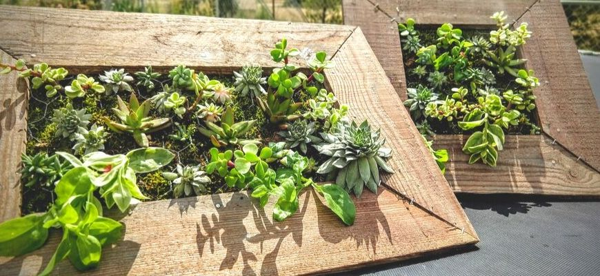 2 wooden frames of succulent plants