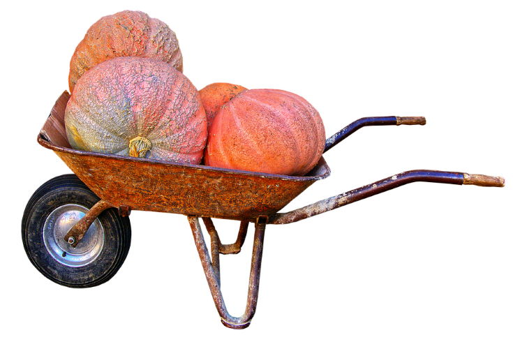 pumpkins on wheelbarrow