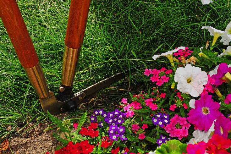 Shears trimming the edge of a garden with flowers in the foreground
