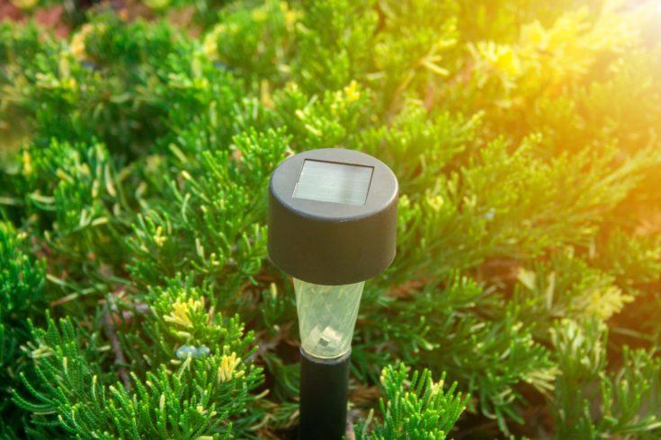 Solar Flashlight for Garden in the Juniper Bush