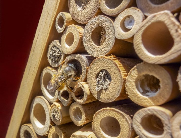 sunny scenery showing a wild bee on a insect hotel