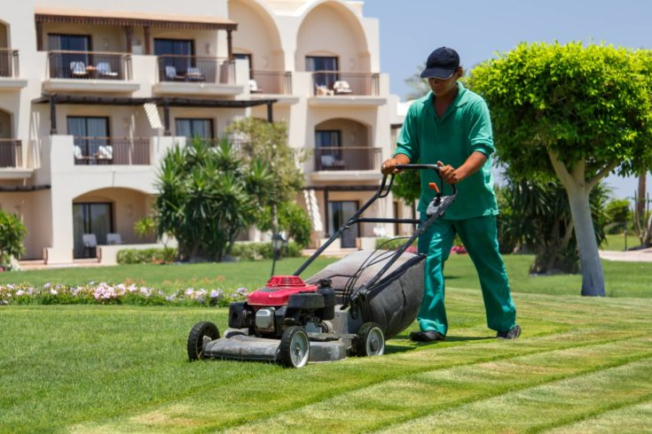 Mowing or cutting the long grass with a green lawn mower